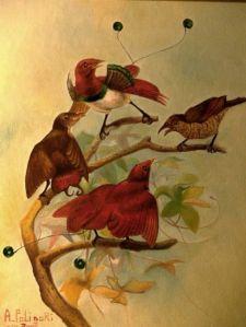 Alexydory__La-danza-dgli-uccelli_g