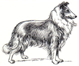 Collie_(PSF)