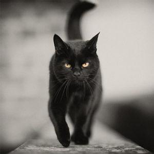 gatto_nero1